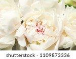 beautiful blooming peony flower ... | Shutterstock . vector #1109873336