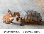 Stock photo rabbit and turtle are discussing the competition the rabbit and turtle tales 1109884898