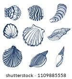 set of seashells  outline on... | Shutterstock .eps vector #1109885558