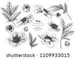 sketch floral botany collection.... | Shutterstock .eps vector #1109933015