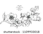 sketch floral botany collection.... | Shutterstock .eps vector #1109933018