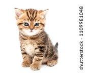 kitten isolated on a white... | Shutterstock . vector #1109981048