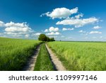 green fields and the way up the ...   Shutterstock . vector #1109997146