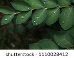 Drops Of Transparent Water On ...