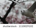 a flying bird  seagull  stares... | Shutterstock . vector #1110029102