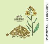 mustard  plant  mustard seeds ... | Shutterstock .eps vector #1110078098
