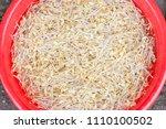 fresh bean sprouts  soybean... | Shutterstock . vector #1110100502
