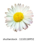 daisy or chamomile isolated on... | Shutterstock .eps vector #1110118952