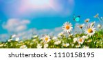 Stock photo chamomiles daisies macro in summer spring field on background blue sky with sunshine and a flying 1110158195