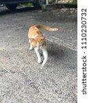 Small photo of Big Mafia cat