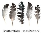 feather from a bird's wing on a ... | Shutterstock . vector #1110234272