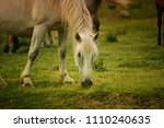 horses in a field. stallion ... | Shutterstock . vector #1110240635