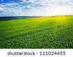 Beautiful Landscape. Green...