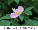 summer bright flowers in the... | Shutterstock . vector #1110273455