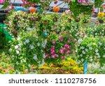 flower display in hanging... | Shutterstock . vector #1110278756