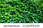 green leafs for background  ... | Shutterstock . vector #1110295142