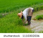 agriculture in rice field | Shutterstock . vector #1110302036