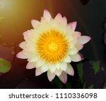 beautiful waterlily or lotus... | Shutterstock . vector #1110336098