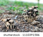 poisonous mushrooms in the... | Shutterstock . vector #1110391586