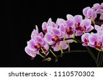 banch of orchid flowers on... | Shutterstock . vector #1110570302