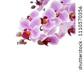 banch of orchid flowers... | Shutterstock . vector #1110570356