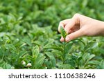 asian woman hand picking up the ... | Shutterstock . vector #1110638246