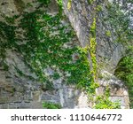 ivy creeper plant growing on a... | Shutterstock . vector #1110646772
