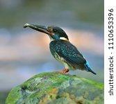beautiful bird  male of blue...   Shutterstock . vector #1110653396