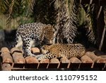 brasilia df  brazil    july 21  ...   Shutterstock . vector #1110795152