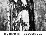 black and white photo with... | Shutterstock . vector #1110853802