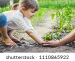 a child plants a plant in the... | Shutterstock . vector #1110865922