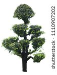 bonsai ebony element garden... | Shutterstock . vector #1110907202