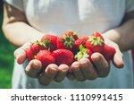 female hands holding fresh... | Shutterstock . vector #1110991415