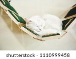 Portrait Of Funny White Cat...