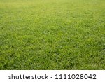 Stripped Natural Green Lawn