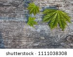 maple leaves on a wooden... | Shutterstock . vector #1111038308