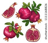 fresh and juicy pomegranate.... | Shutterstock .eps vector #1111168826