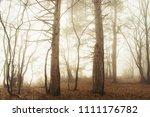 fantasy woods in sunrise light | Shutterstock . vector #1111176782