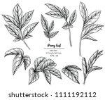sketch floral botany collection.... | Shutterstock .eps vector #1111192112
