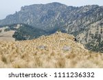 pine tree forest on the rocky... | Shutterstock . vector #1111236332