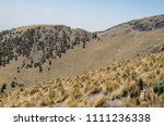 pine tree forest on the rocky... | Shutterstock . vector #1111236338