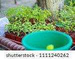 gardening on a country site in... | Shutterstock . vector #1111240262