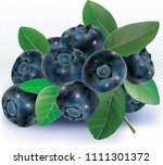 blueberries group with leaves... | Shutterstock .eps vector #1111301372