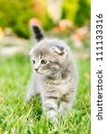 Stock photo cat walking on the green grass 111133316
