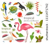 set of exotic plants. tropical... | Shutterstock .eps vector #1111471742