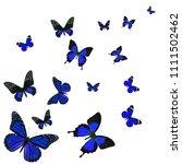 beautiful blue butterfly flying ...   Shutterstock . vector #1111502462