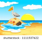 pelican bird on the beach... | Shutterstock .eps vector #1111537622