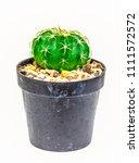 cactus in flowerpot isolated on ... | Shutterstock . vector #1111572572