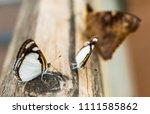 close up macro photography of... | Shutterstock . vector #1111585862