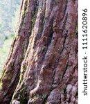 "detail of ""the washington tree"" ... | Shutterstock . vector #1111620896"